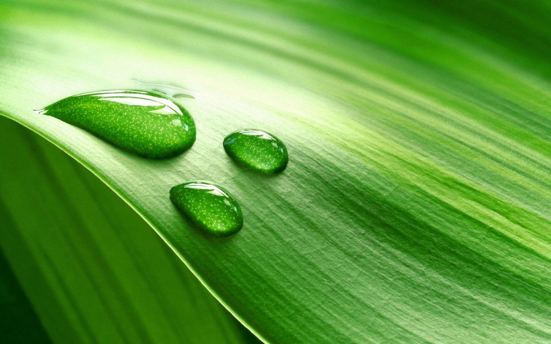 Hoja verde y gotas de agua - 1440x900