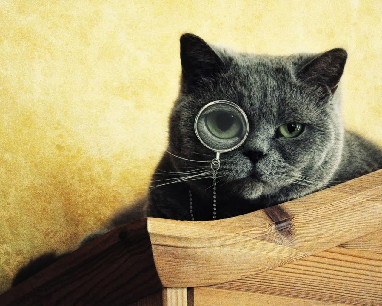 Imágenes graciosas de gatos - 1280x1024