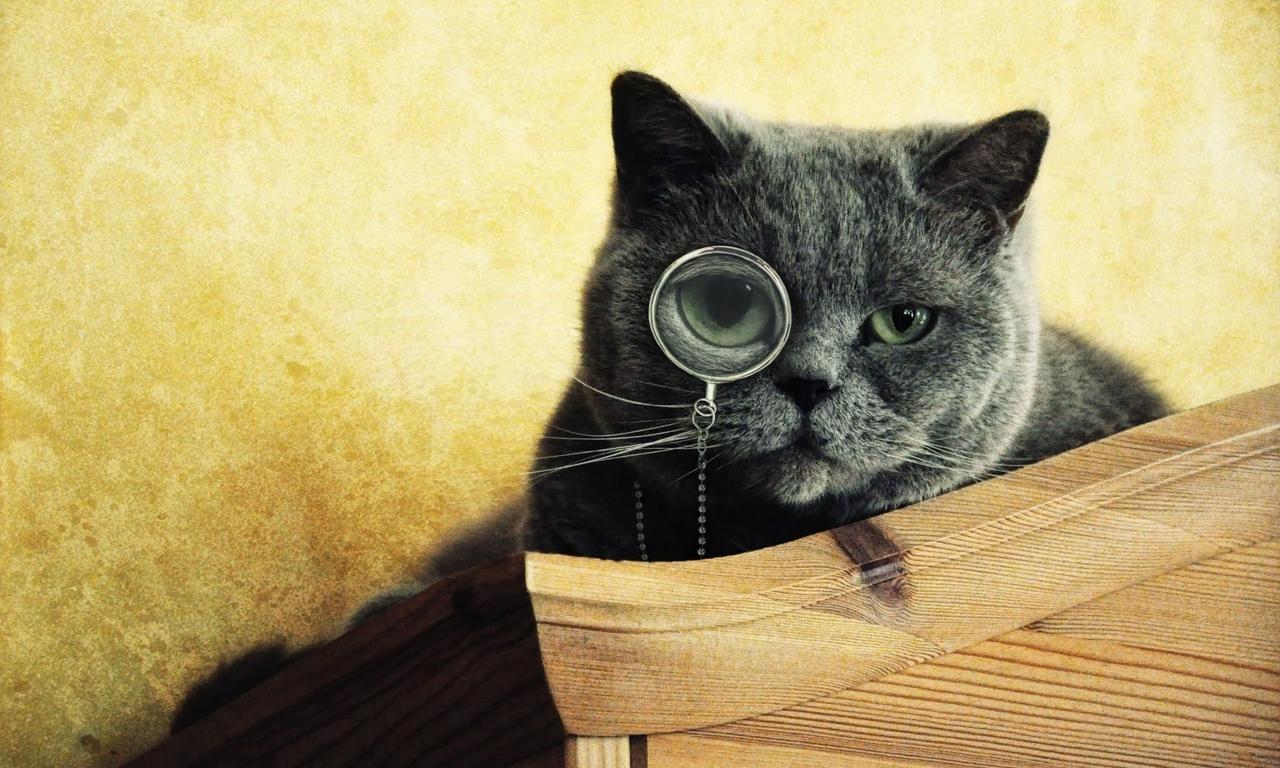 Imágenes graciosas de gatos - 1280x768