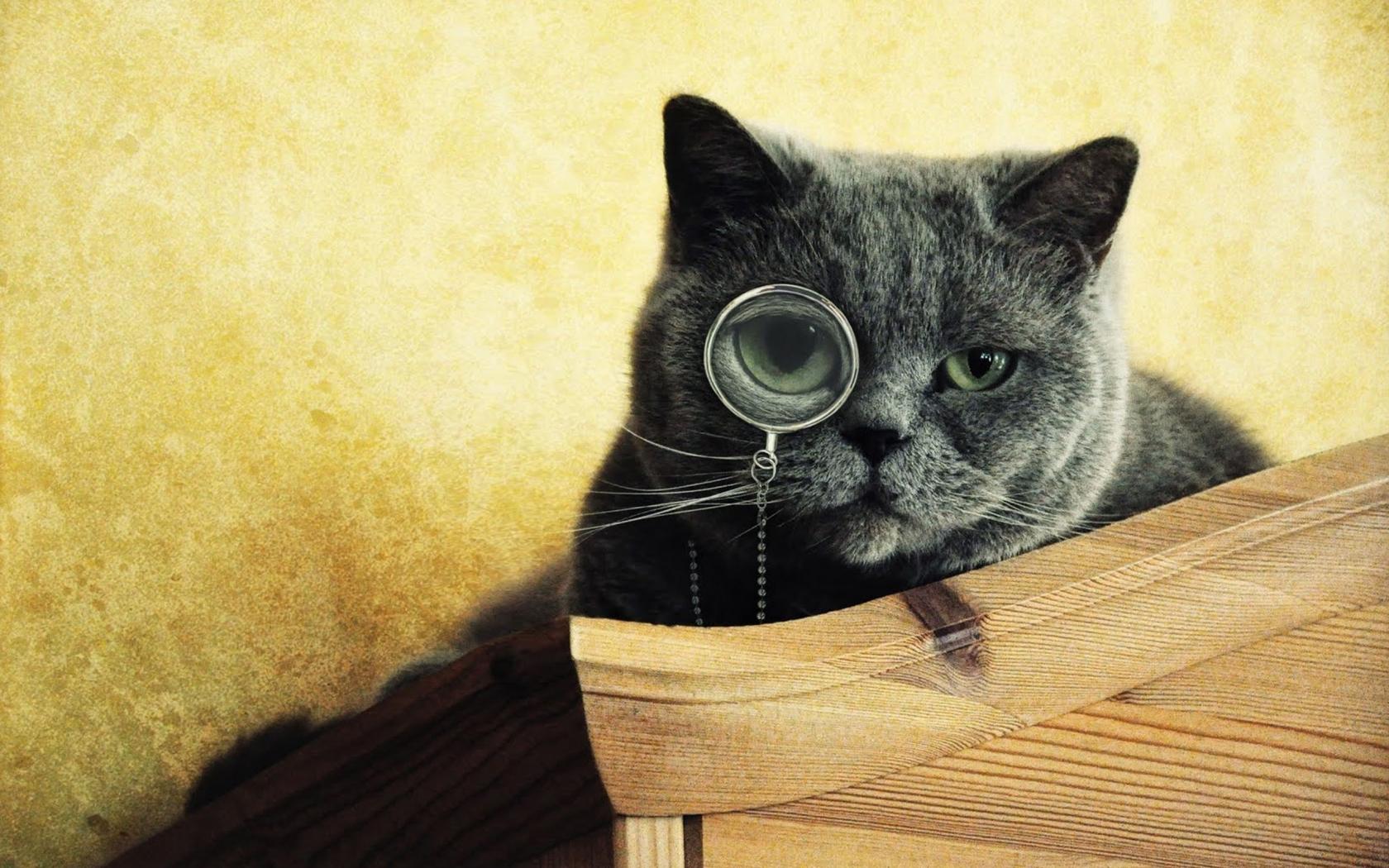 Imágenes graciosas de gatos - 1680x1050