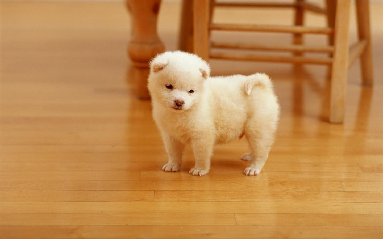 Lindo cachorro - 1440x900