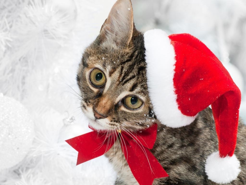 Lindo gato con gorro de navidad - 1024x768