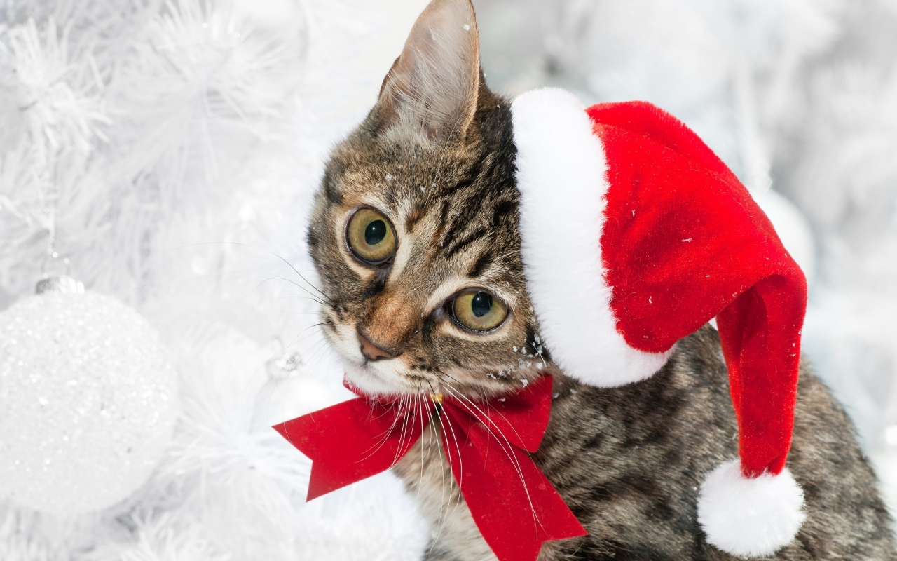 Lindo gato con gorro de navidad - 1280x800