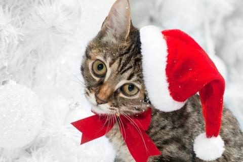Lindo gato con gorro de navidad - 480x320