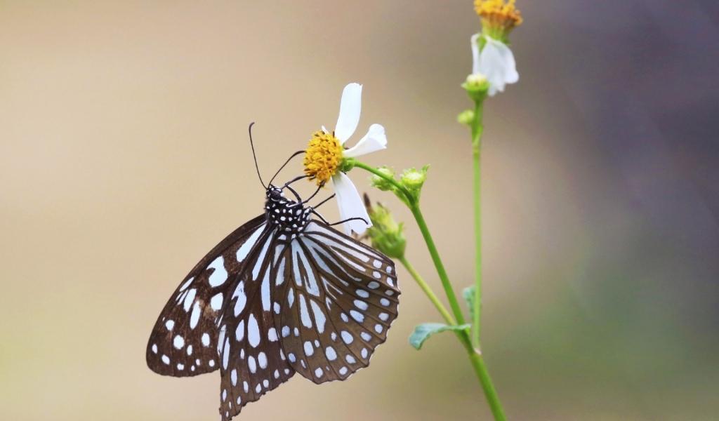 Mariposa y una flor - 1024x600