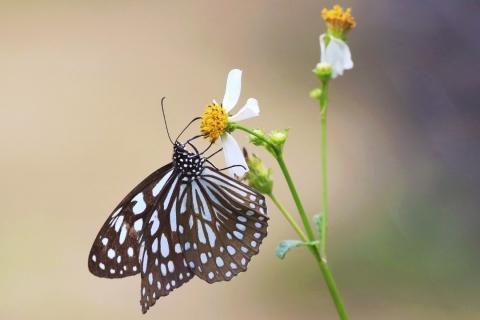 Mariposa y una flor - 480x320