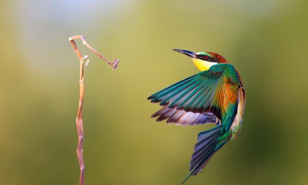 Pájaro de colores - 1000x600