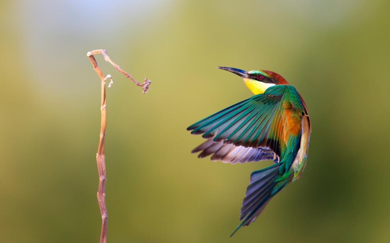 Pájaro de colores - 1280x800
