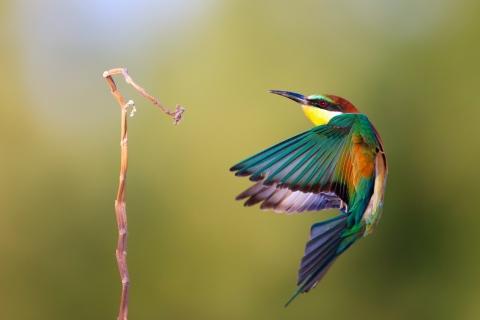 Pájaro de colores - 480x320