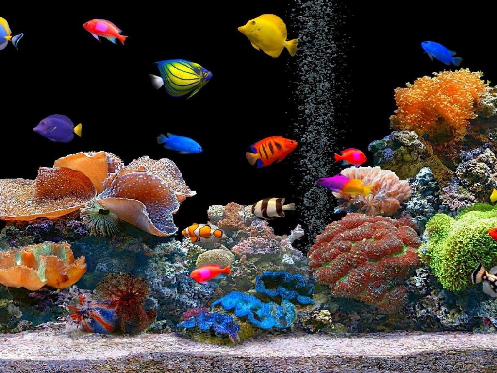 Peces de colores - 1024x768