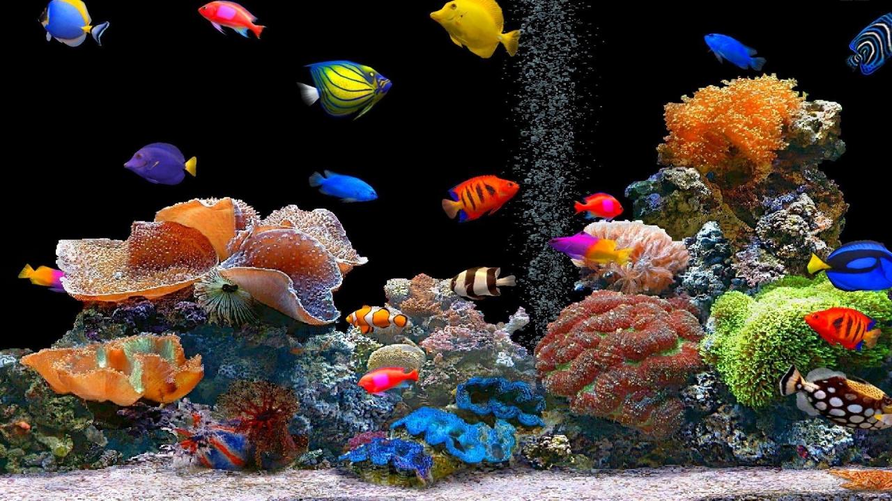 Peces de colores - 1280x720