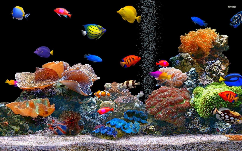 Peces de colores - 1440x900