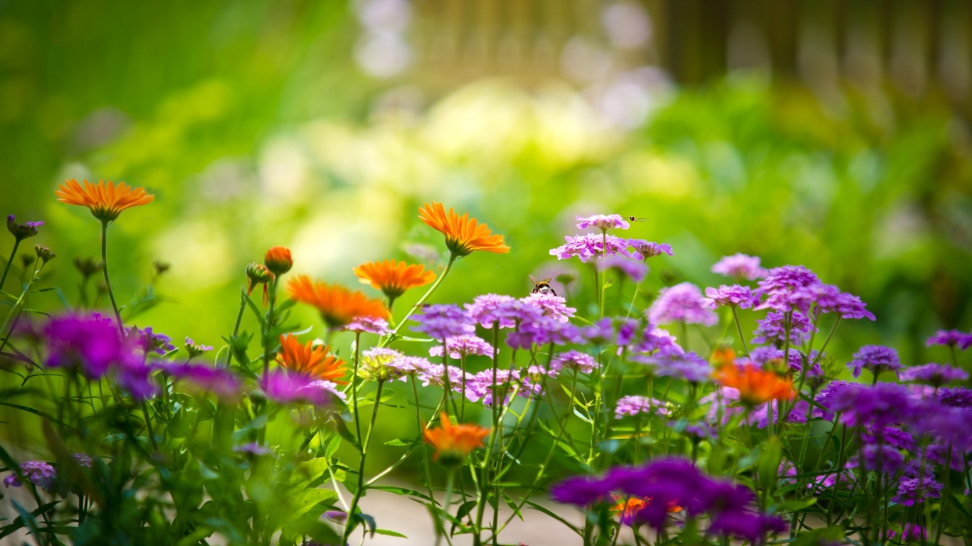 Pequeñas flores - 1366x768