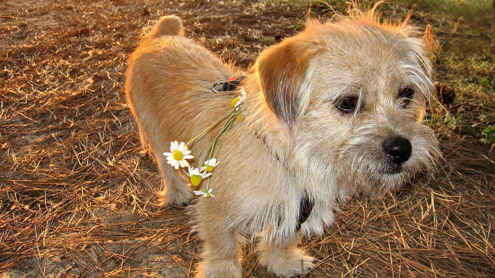 Pequeño cachorro - 1600x900