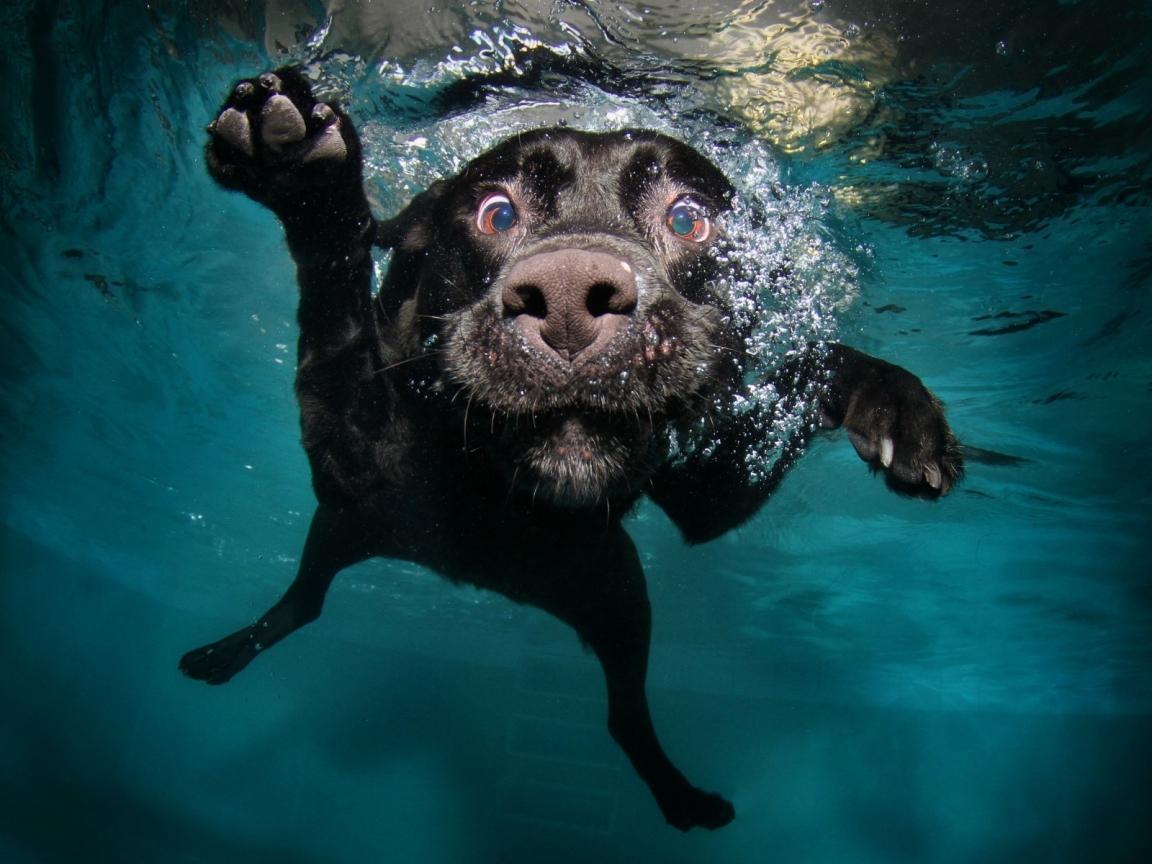 Perro en el agua - 1152x864