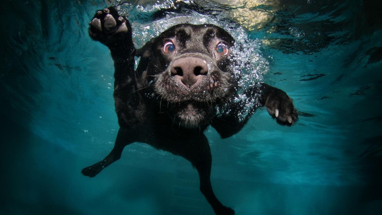 Perro en el agua - 1280x720
