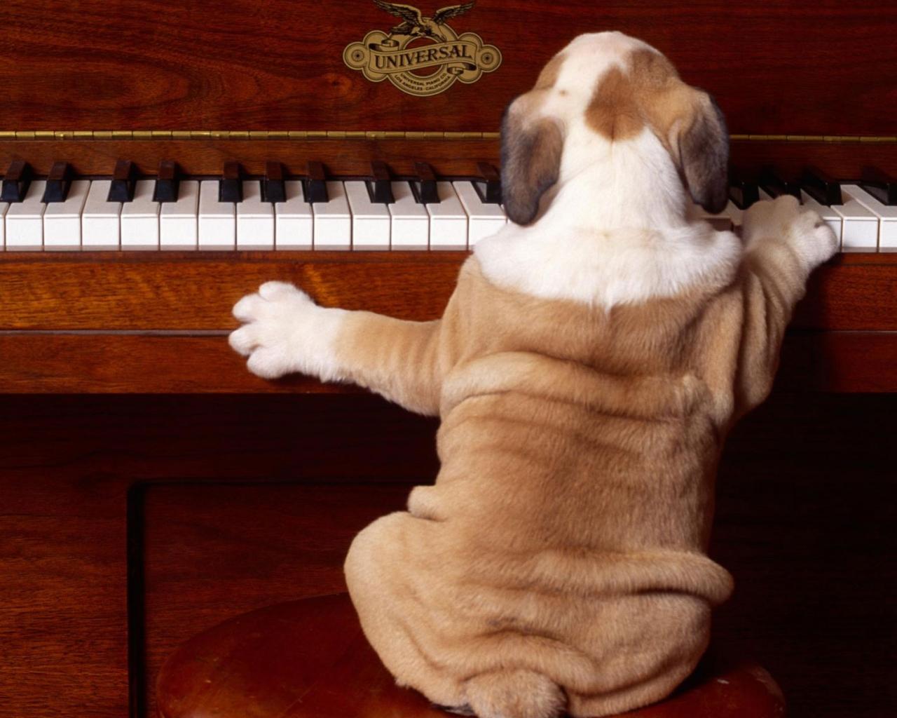 Perro tocando piano - 1280x1024