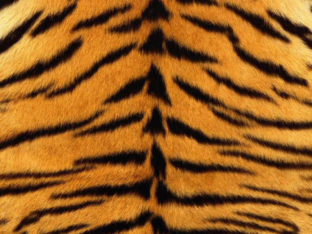 Piel de tigre - 1024x768