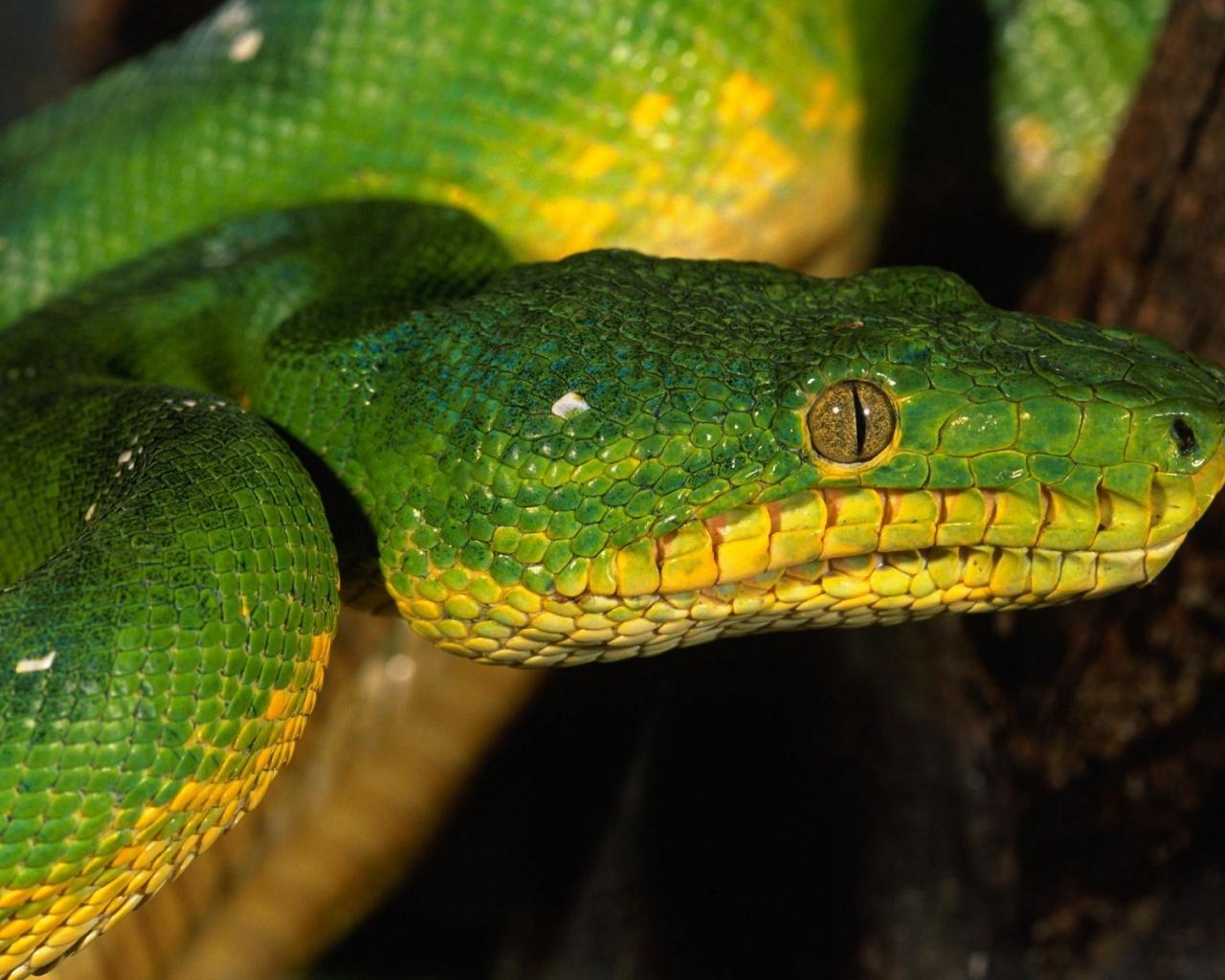 Serpiente verde - 1280x1024