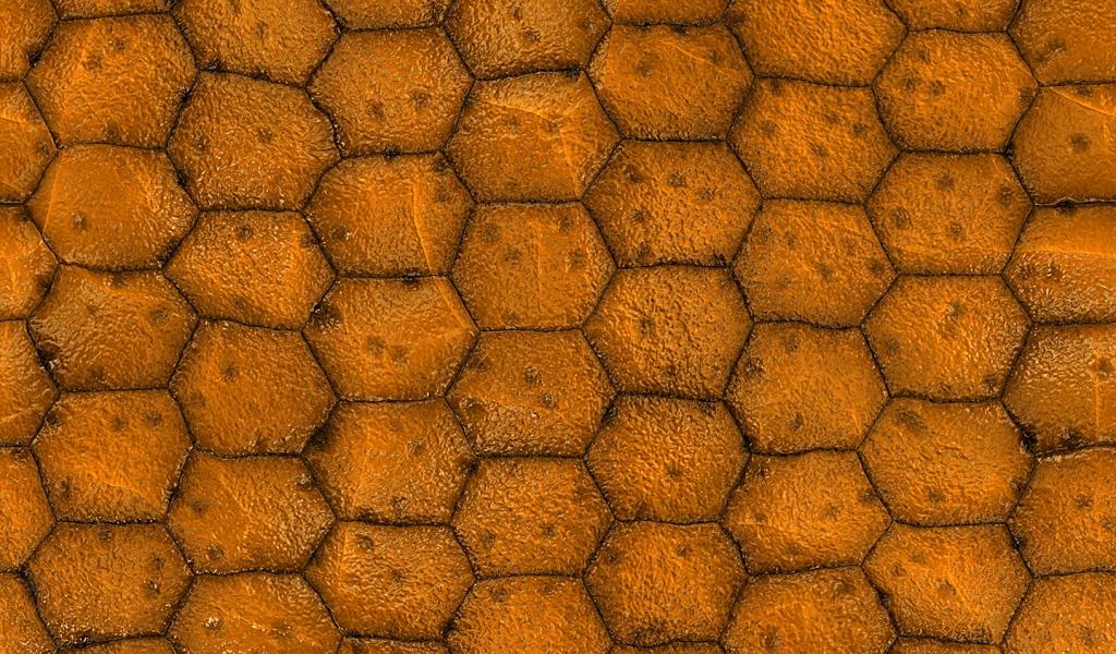Textura con poligonos - 1024x600