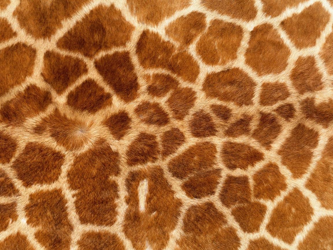 Textura de piel de jirafas - 1152x864