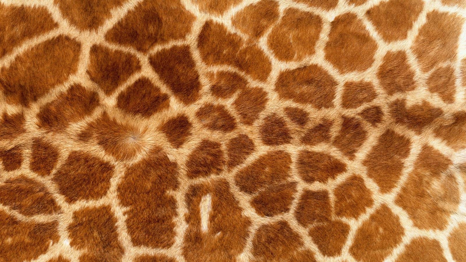 Textura de piel de jirafas - 1600x900