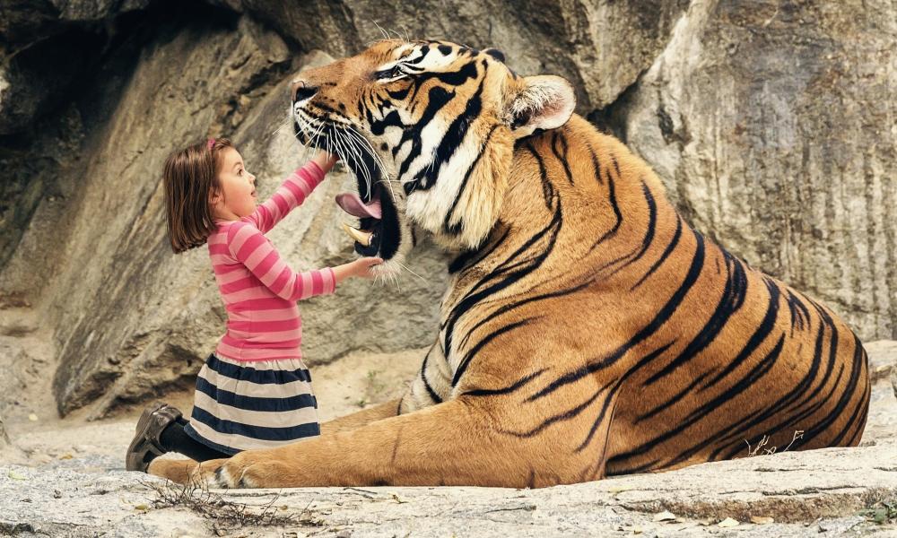 Tigre con boca abierta - 1000x600
