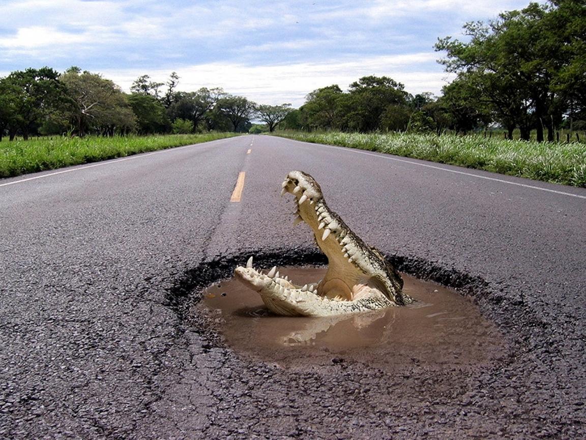 Un cocodrilo en la pista - 1152x864