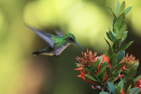 Un colibrí en una flor - 480x320