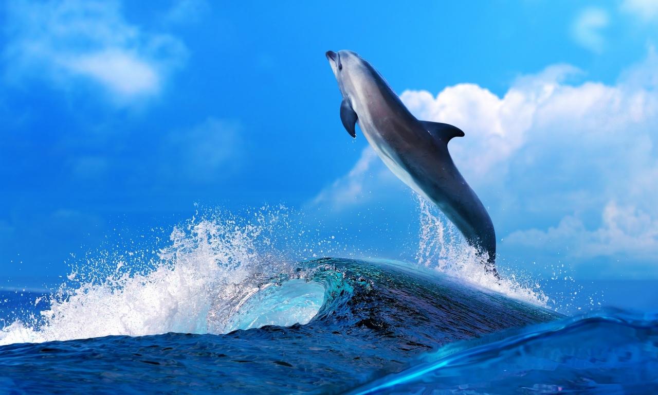 Un delfín saltando - 1280x768