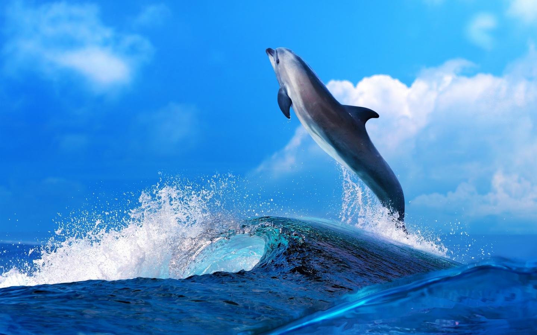 Un delfín saltando - 1440x900