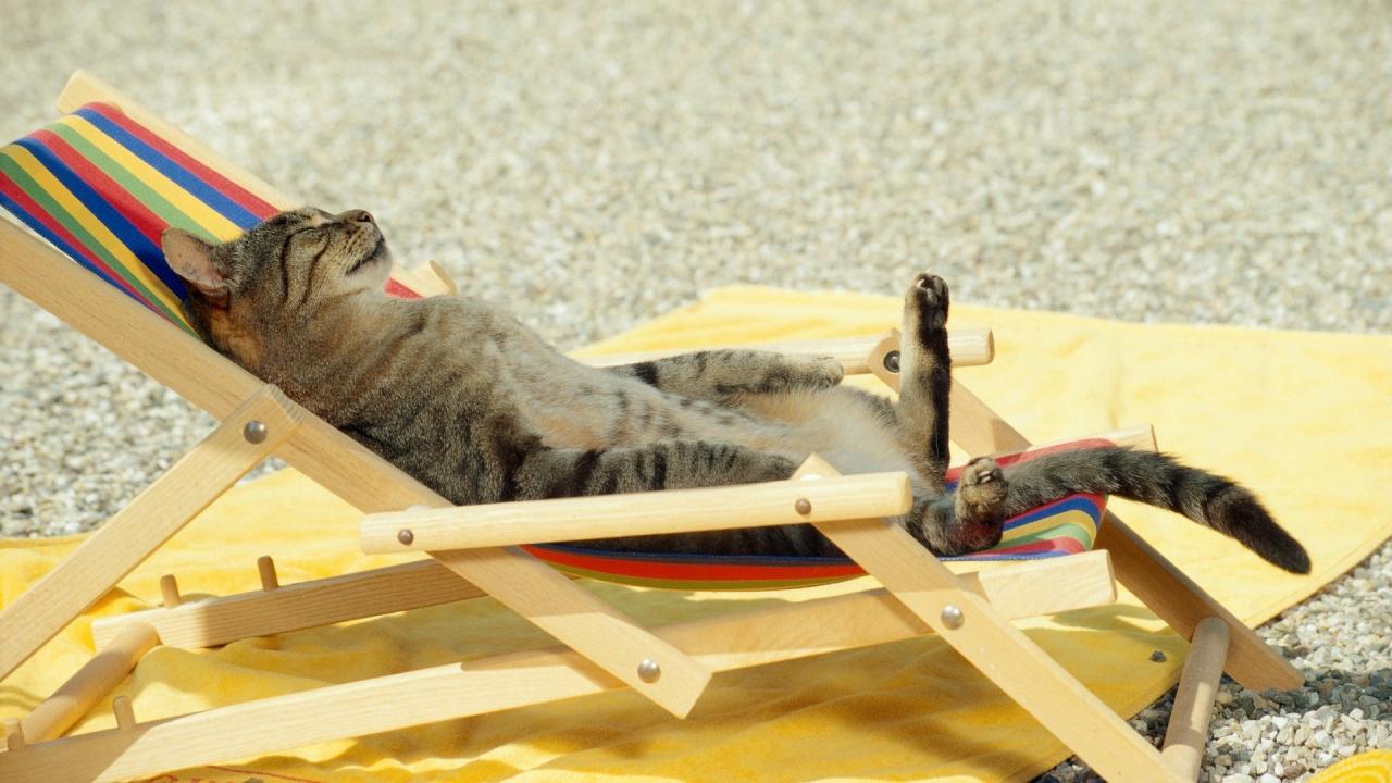 Un gato tomando sol - 1280x720