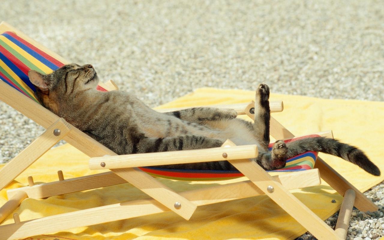 Un gato tomando sol - 1280x800