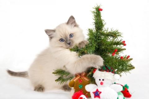 Un gato y arbolito de navidad - 480x320