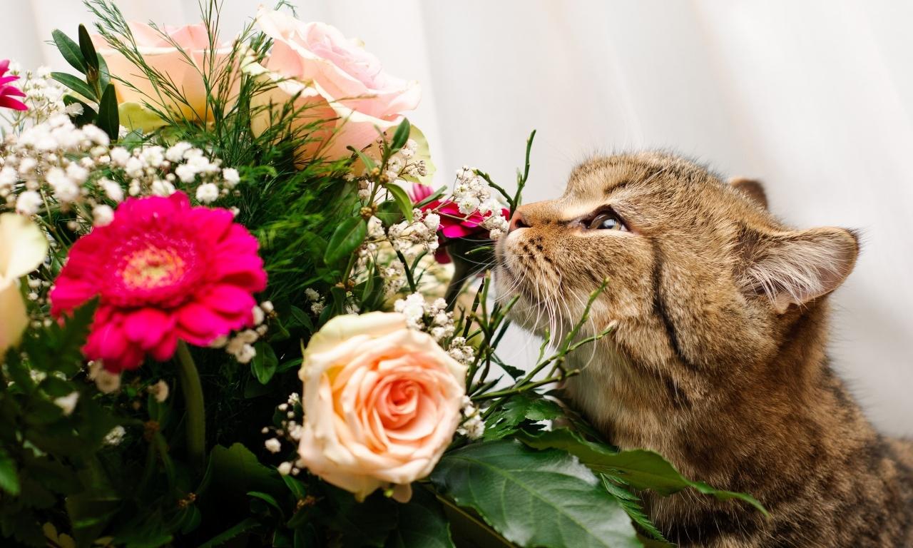 Un gato y rosas - 1280x768