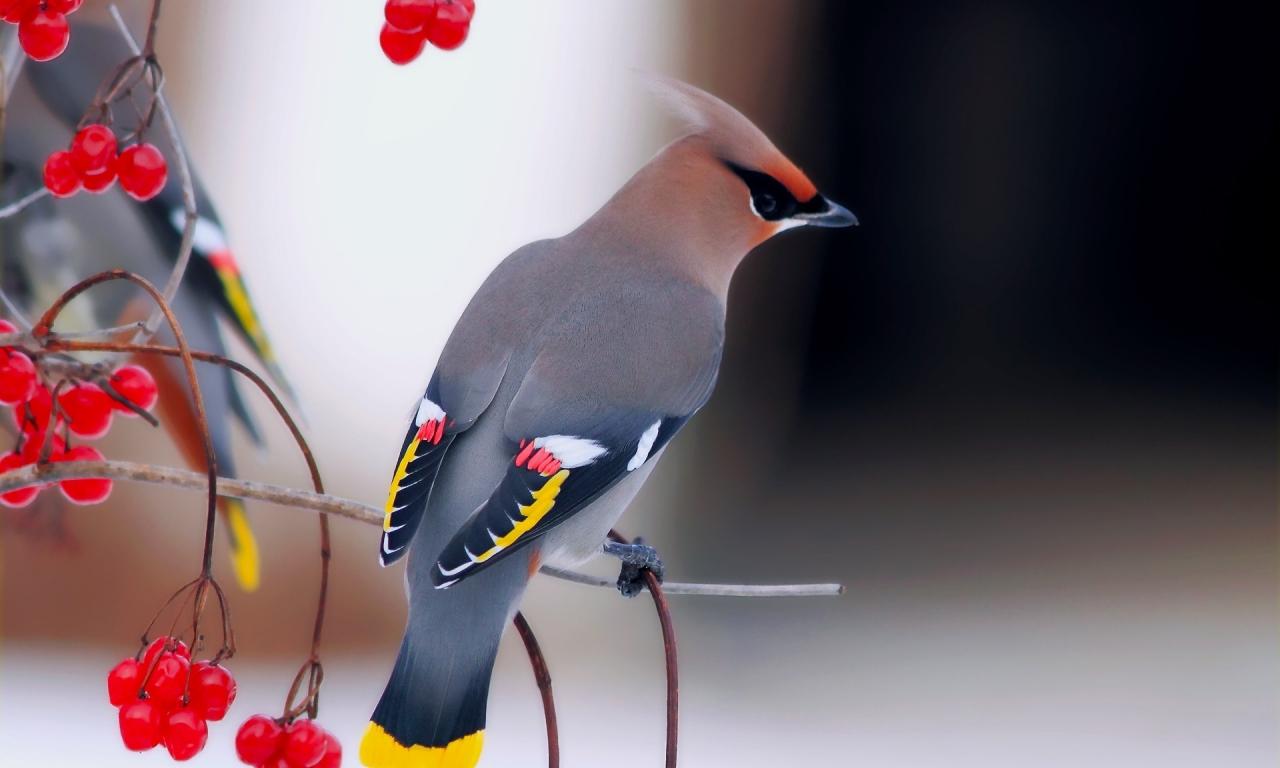 Una hermosa ave - 1280x768