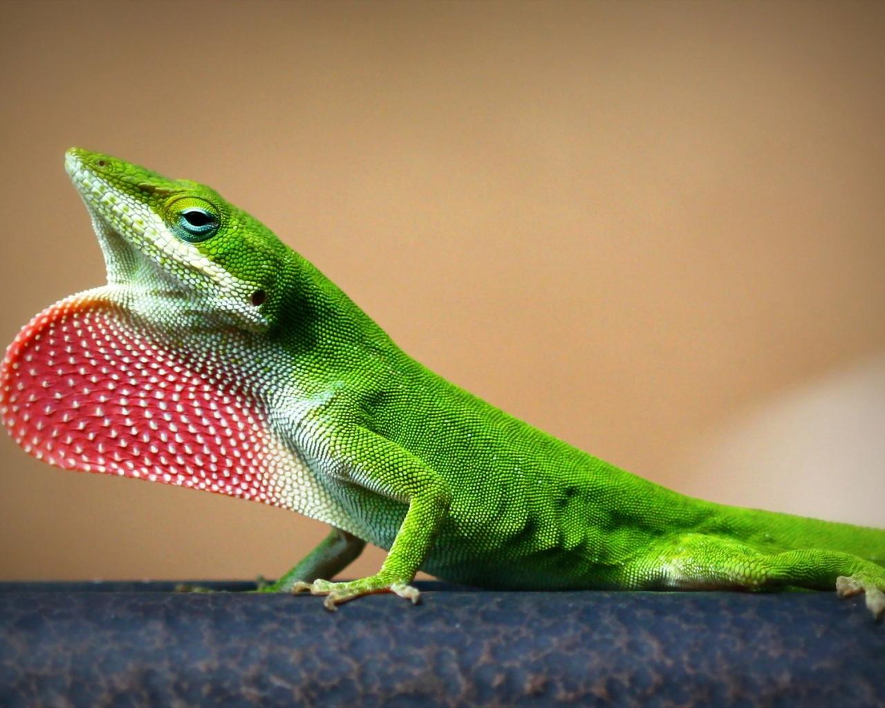 Una lagartija verde - 1280x1024