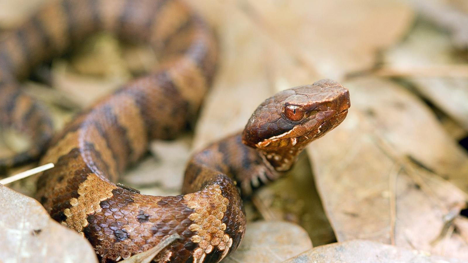 Una serpiente aterradora - 1600x900