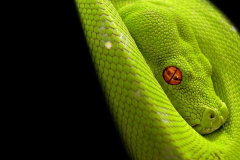 Una serpiente verde - 480x320