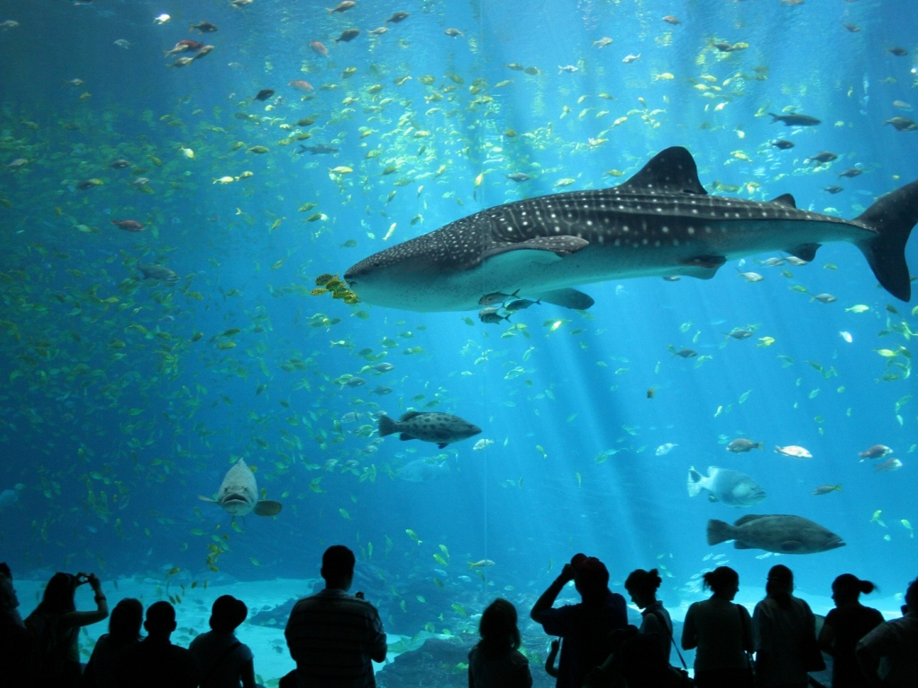 Animales marinos en acuario - 1024x768