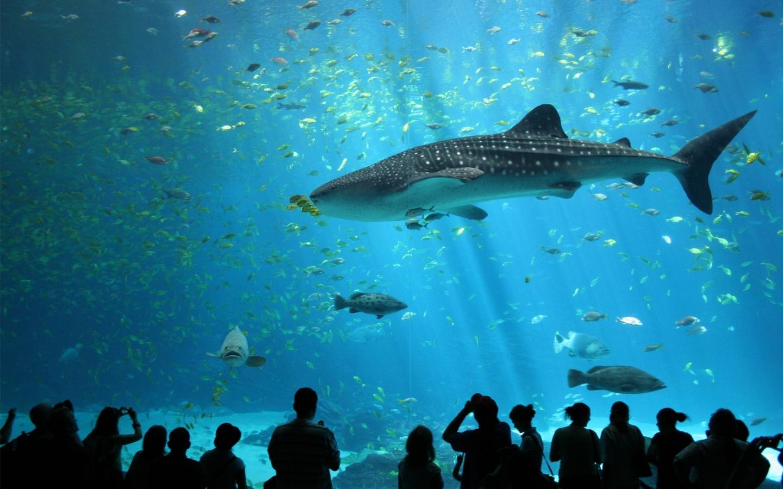 Animales marinos en acuario - 1440x900