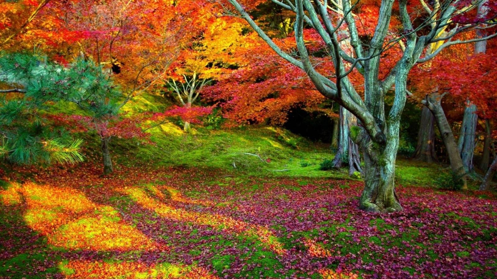 Arboles con hojas de colores - 1600x900
