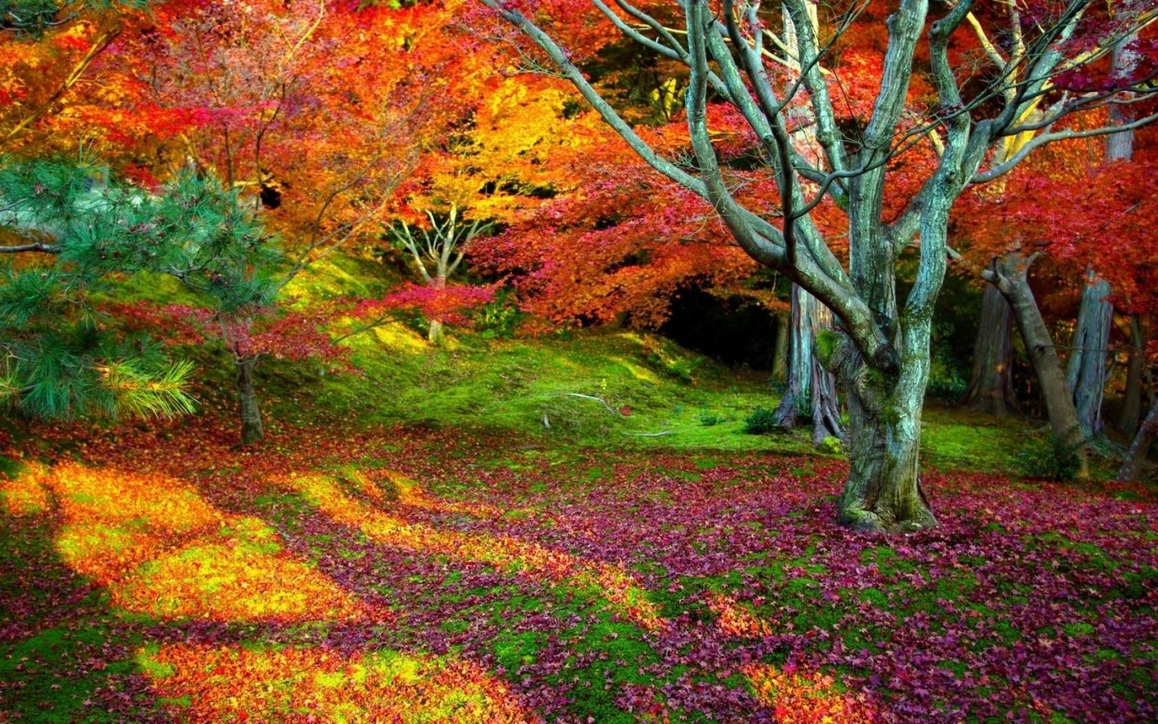 Arboles con hojas de colores - 1680x1050
