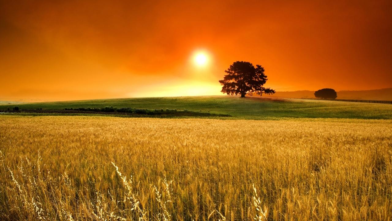 Atardecer en campos de trigo - 1280x720