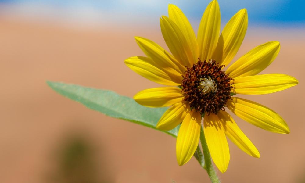 Flor amarilla en macro - 1000x600