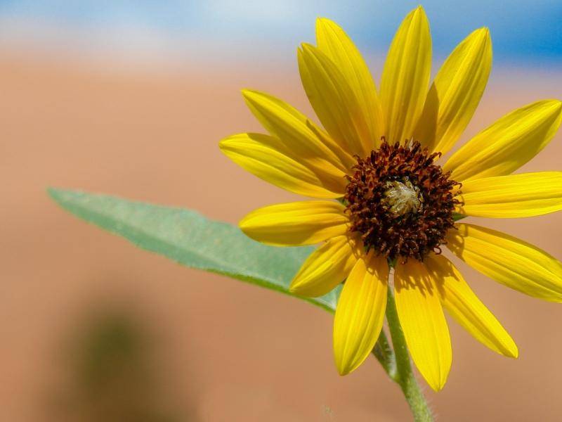 Flor amarilla en macro - 800x600