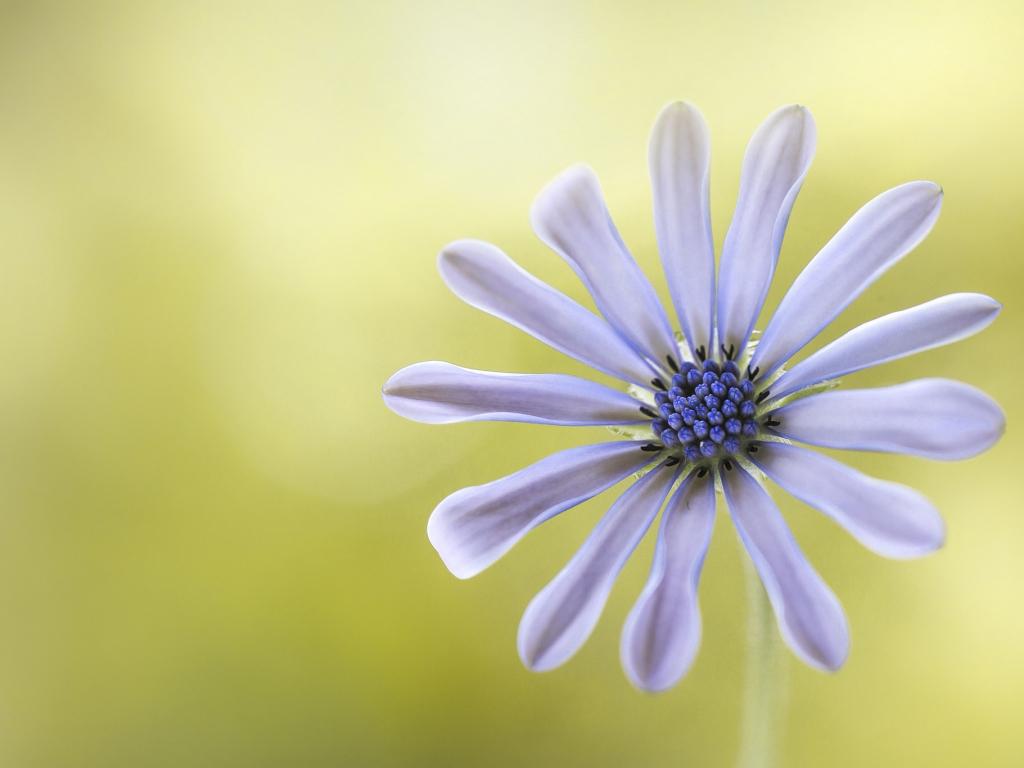 Flor púrpura - 1024x768