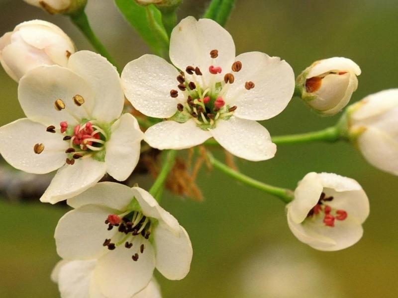 Flores blancas con pistilos - 800x600
