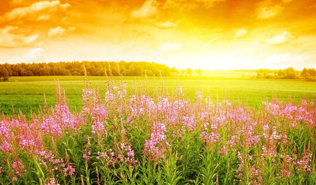 Flores rosadas en paisaje - 1024x600