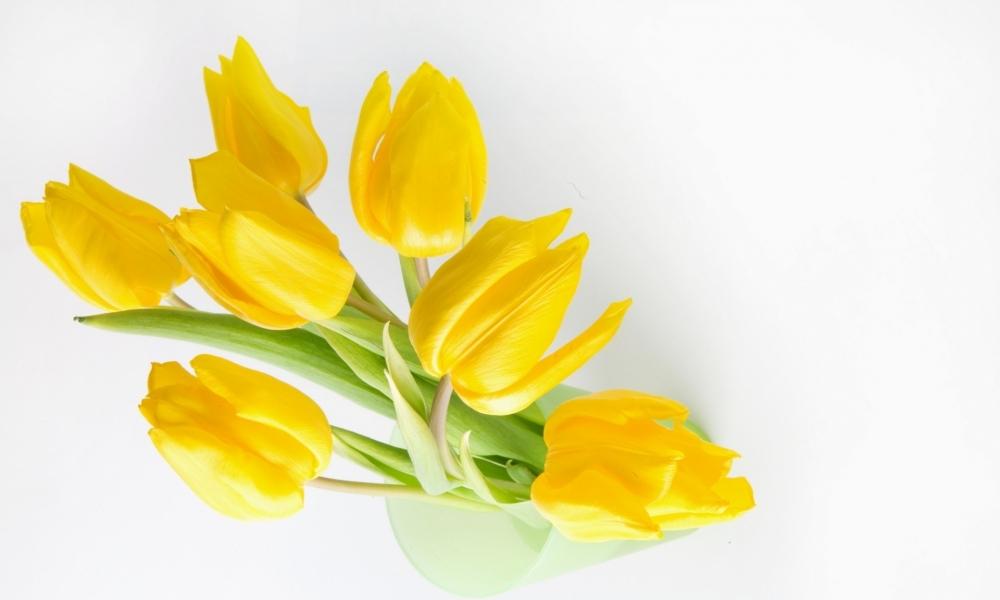 Fondo blanco y flores amarillas - 1000x600